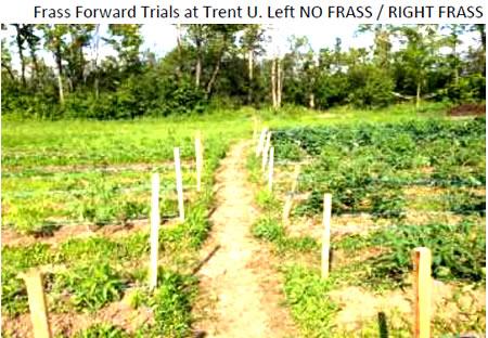 frass-forward-trent-university-fertilizer
